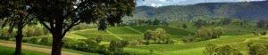vineyards in Mount View