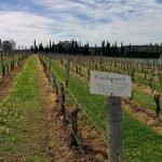 Lakes Folly vineyard